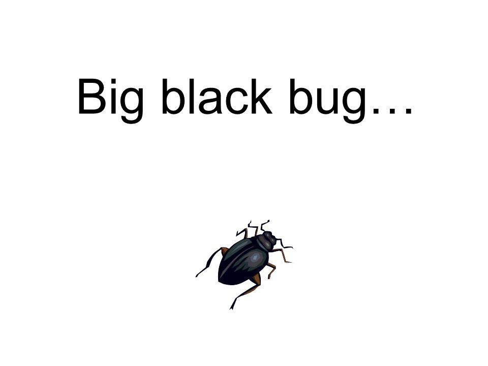 Big black bug…
