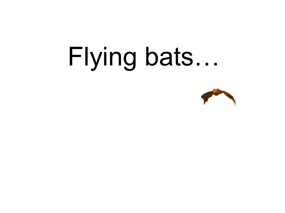 Flying bats…