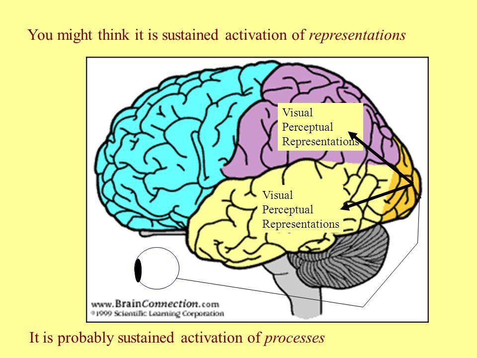 Visual Perceptual Representations Visual Perceptual Representations You might think it is sustained activation of representations It is probably sustained activation of processes