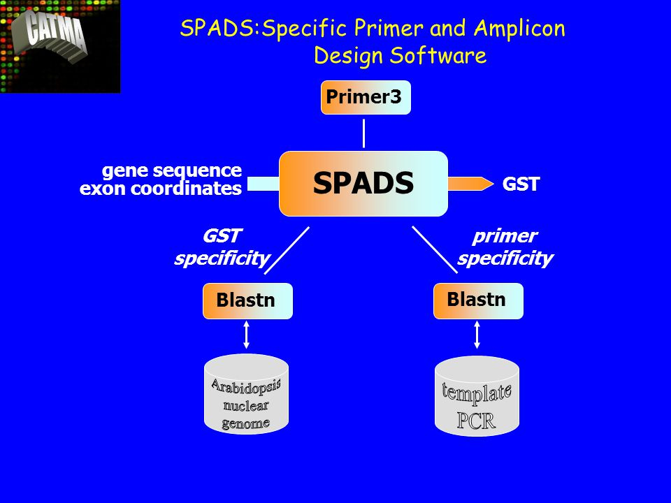 SPADS gene sequence exon coordinates GST Blastn Primer3 GST specificity primer specificity SPADS:Specific Primer and Amplicon Design Software