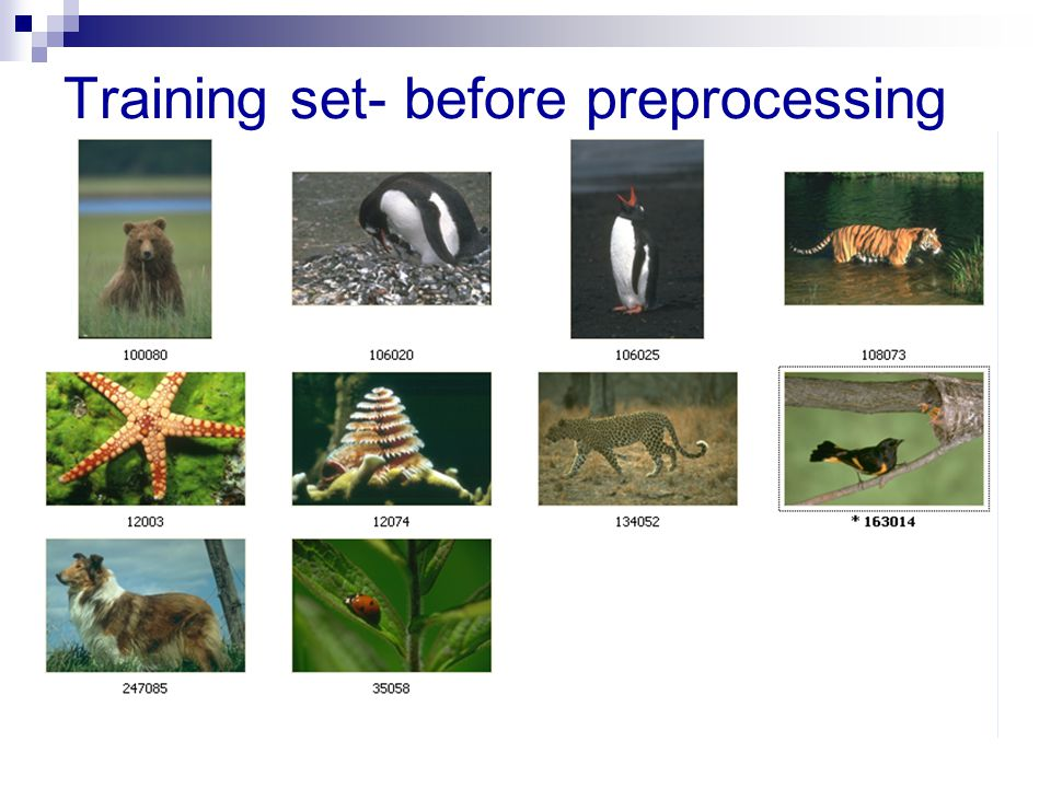 Training set- before preprocessing
