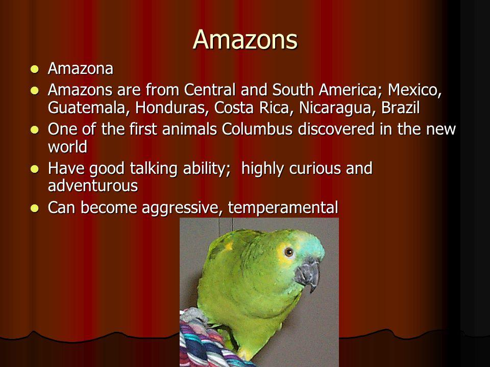 Amazons Amazona Amazona Amazons are from Central and South America; Mexico, Guatemala, Honduras, Costa Rica, Nicaragua, Brazil Amazons are from Centra