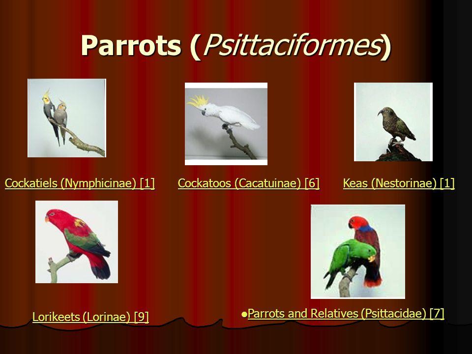 Parrots ( Psittaciformes ) Cockatiels (Nymphicinae) [1] Cockatiels (Nymphicinae) [1] Cockatoos (Cacatuinae) [6] Cockatoos (Cacatuinae) [6] Keas (Nesto