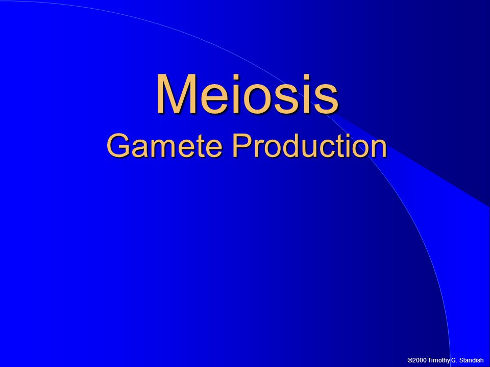 ©2000 Timothy G. Standish Meiosis Gamete Production