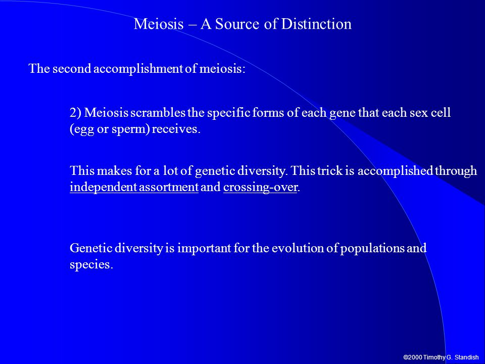 ©2000 Timothy G. Standish Meiosis – A Source of Distinction The second accomplishment of meiosis: 2) Meiosis scrambles the specific forms of each gene