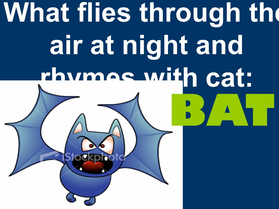 What flies through the air at night and rhymes with cat: BAT