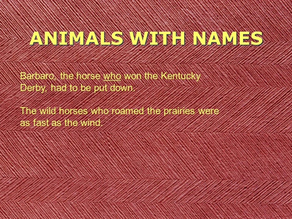 ANIMALS WITH NAMES Barbaro, the horse who won the Kentucky Derby, had to be put down.