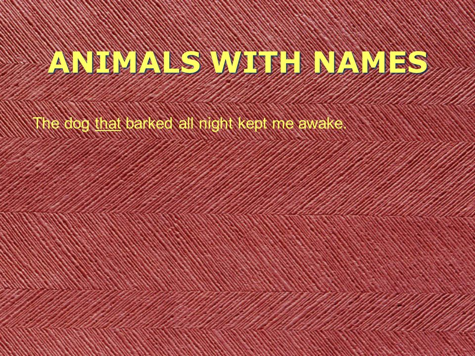 ANIMALS WITH NAMES The dog that barked all night kept me awake.