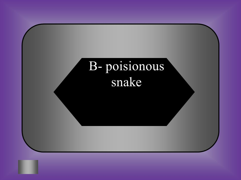 A:B: Bad illnessPoisionous snake #1- $100 The man caught a cobra.