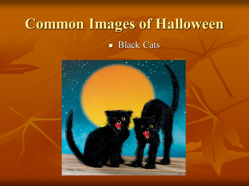 Common Images of Halloween Black Cats Black Cats