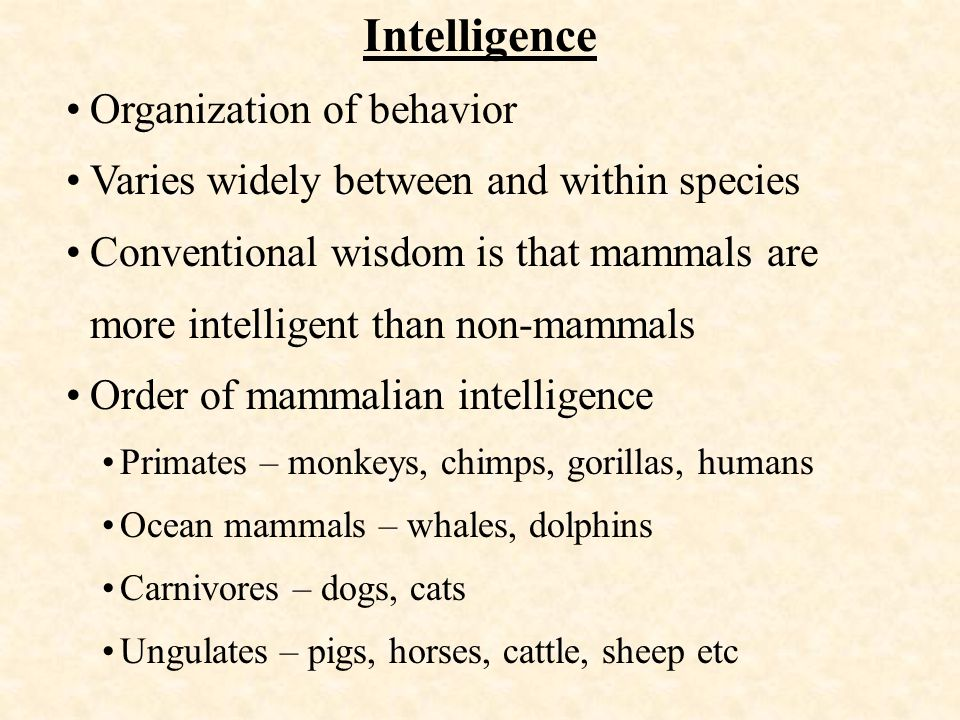 Intelligence Organization of behavior Varies widely between and within species Conventional wisdom is that mammals are more intelligent than non-mammals Order of mammalian intelligence Primates – monkeys, chimps, gorillas, humans Ocean mammals – whales, dolphins Carnivores – dogs, cats Ungulates – pigs, horses, cattle, sheep etc