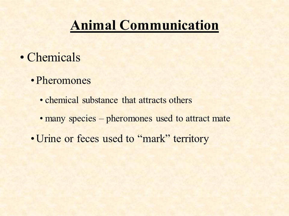 Animal Communication Chemicals Pheromones chemical substance that attracts others many species – pheromones used to attract mate Urine or feces used to mark territory