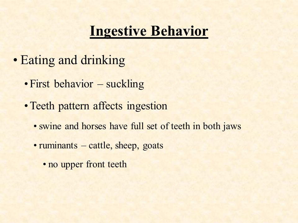 Ingestive Behavior Eating and drinking First behavior – suckling Teeth pattern affects ingestion swine and horses have full set of teeth in both jaws ruminants – cattle, sheep, goats no upper front teeth