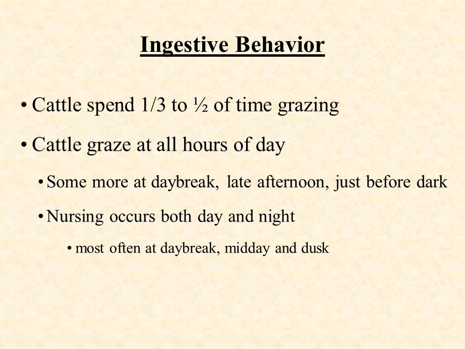 Ingestive Behavior Cattle spend 1/3 to ½ of time grazing Cattle graze at all hours of day Some more at daybreak, late afternoon, just before dark Nursing occurs both day and night most often at daybreak, midday and dusk