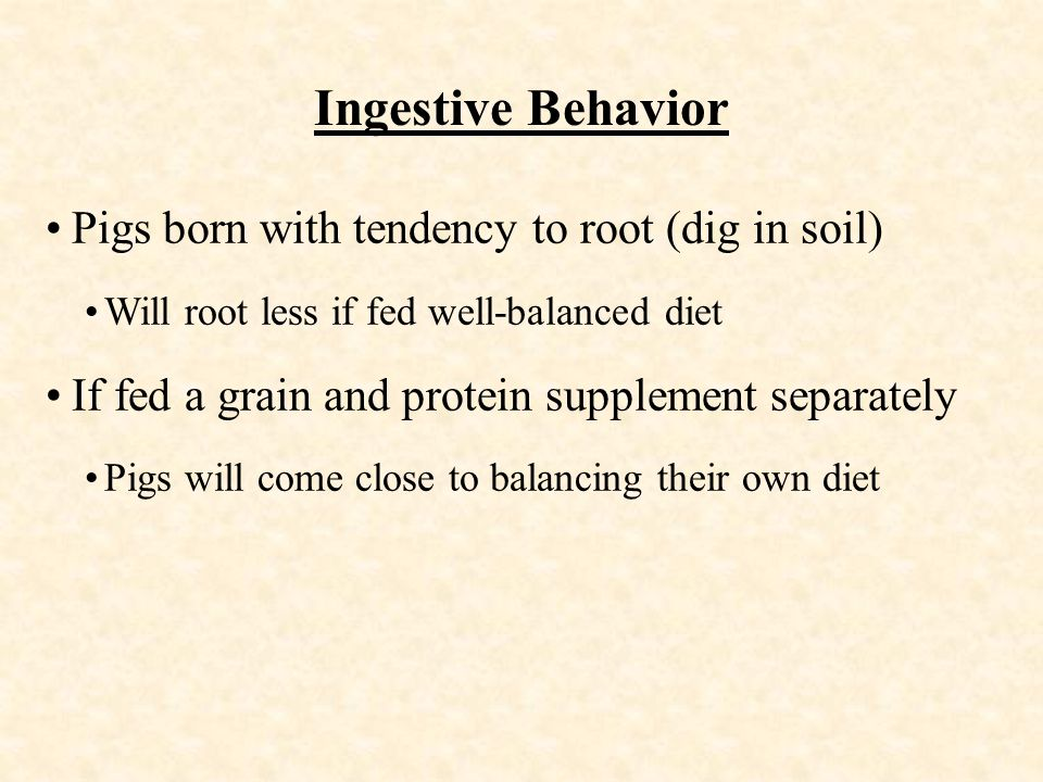 Ingestive Behavior Pigs born with tendency to root (dig in soil) Will root less if fed well-balanced diet If fed a grain and protein supplement separately Pigs will come close to balancing their own diet