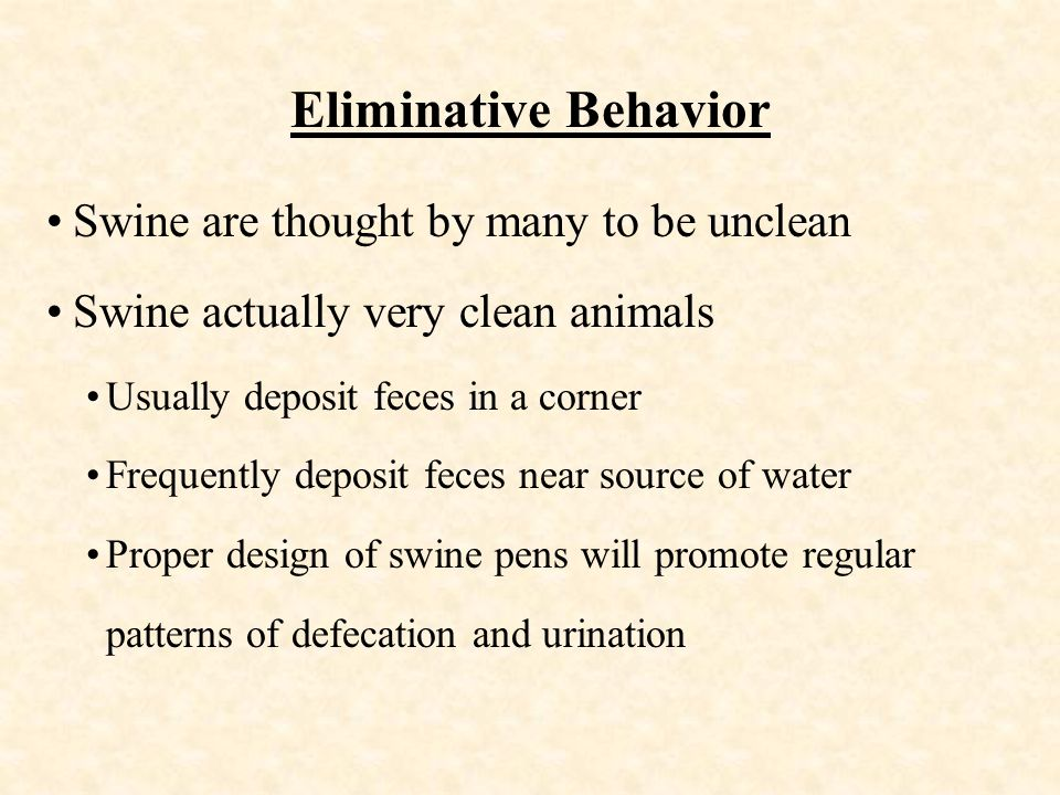 Eliminative Behavior Swine are thought by many to be unclean Swine actually very clean animals Usually deposit feces in a corner Frequently deposit feces near source of water Proper design of swine pens will promote regular patterns of defecation and urination