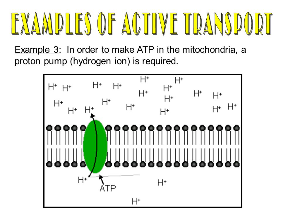 Example 3: In order to make ATP in the mitochondria, a proton pump (hydrogen ion) is required.