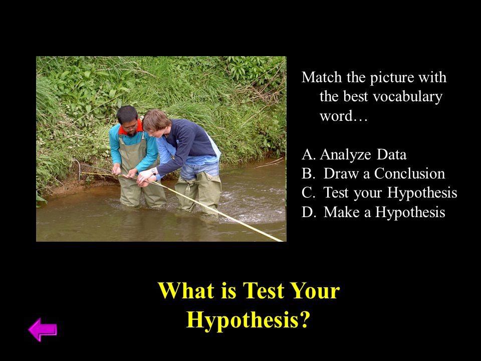 Match the picture with the best vocabulary word… A.Analyze Data B. Draw a Conclusion C. Test your Hypothesis D. Make a Hypothesis What is Test Your Hy