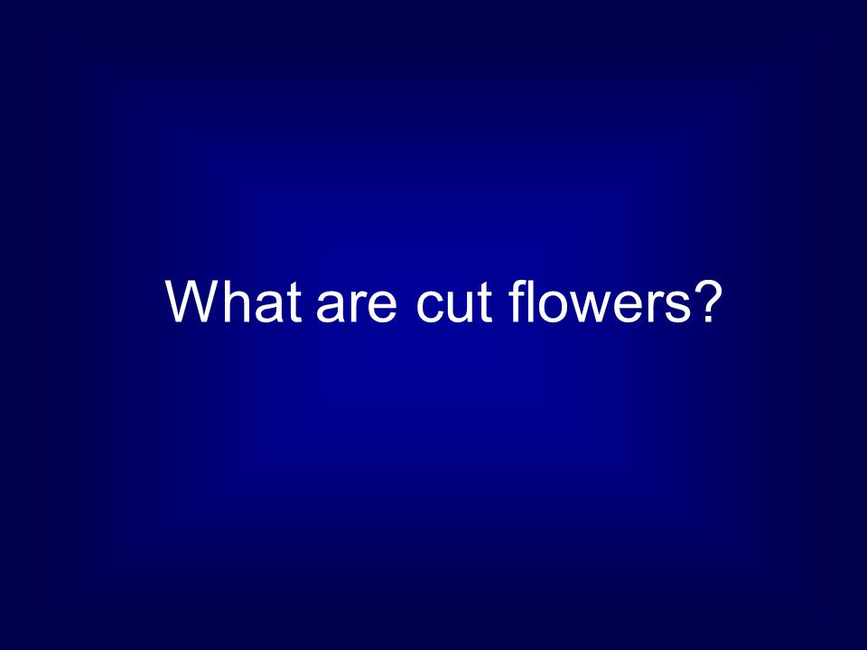 What are cut flowers
