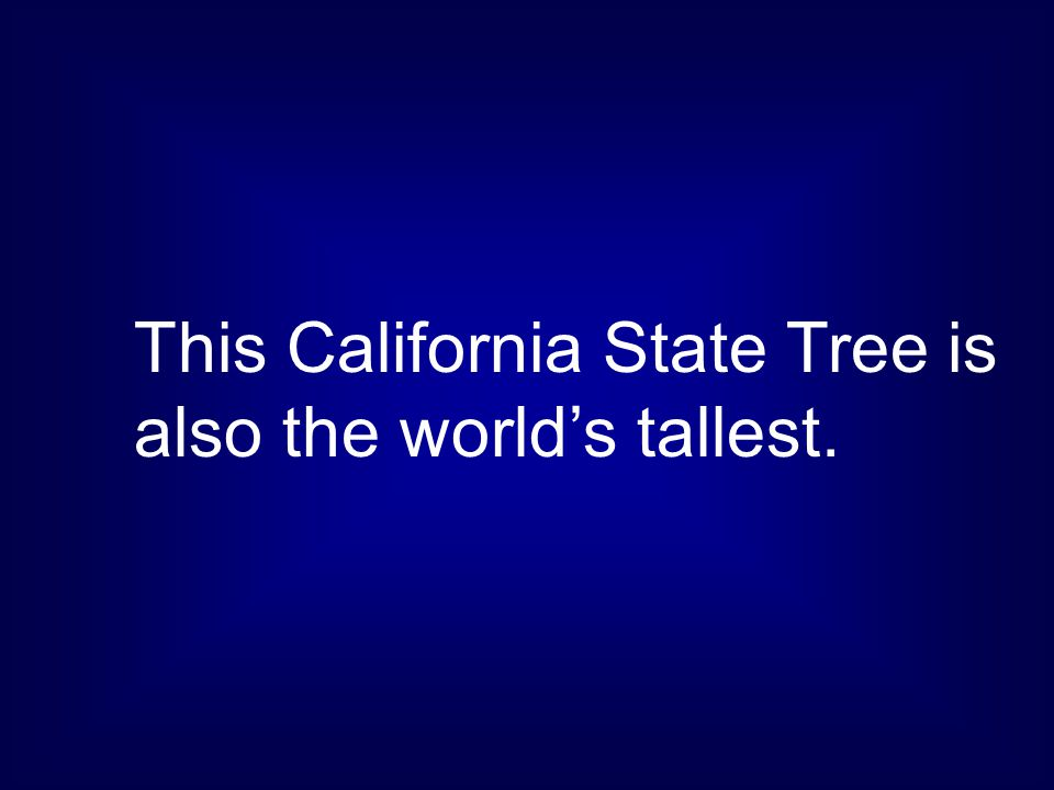 This California State Tree is also the world's tallest.