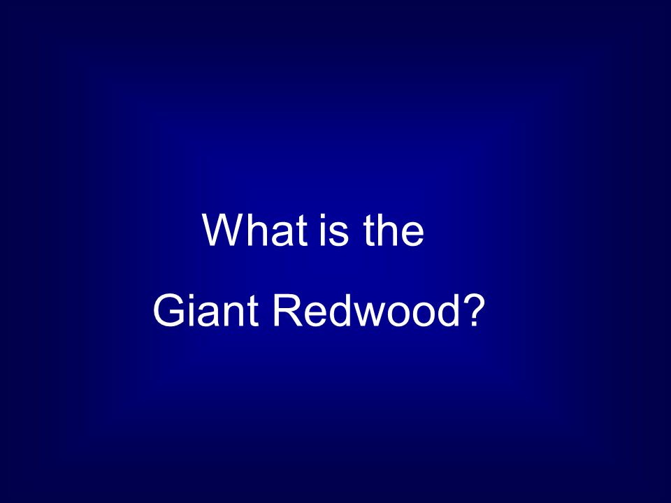 What is the Giant Redwood