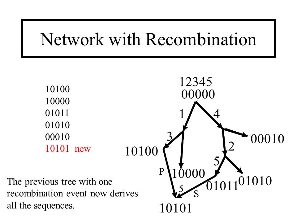 Network with Recombination 00000 1 2 4 3 5 10100 10000 01011 00010 01010 12345 10100 10000 01011 01010 00010 10101 new 10101 The previous tree with one recombination event now derives all the sequences.