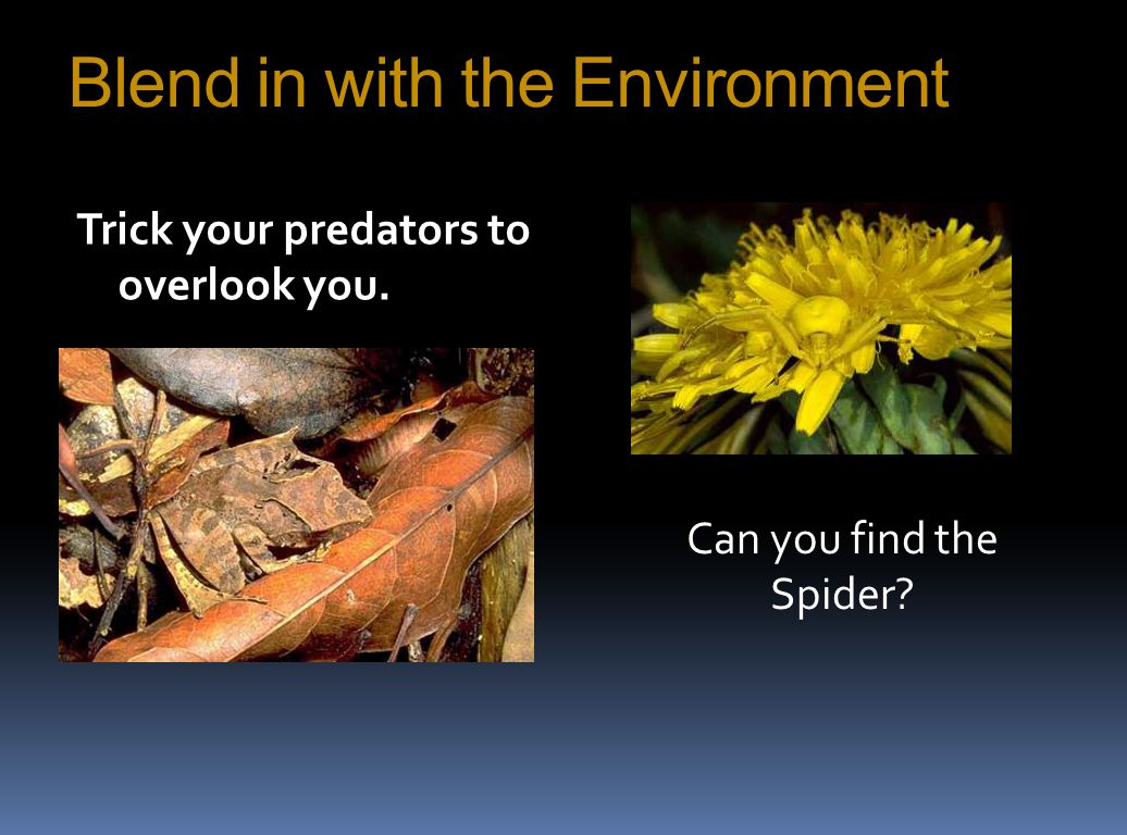 Blend in with the Environment Trick your predators to overlook you. Can you find the Spider?