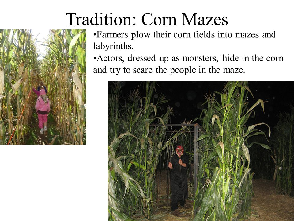 Tradition: Corn Mazes Farmers plow their corn fields into mazes and labyrinths.