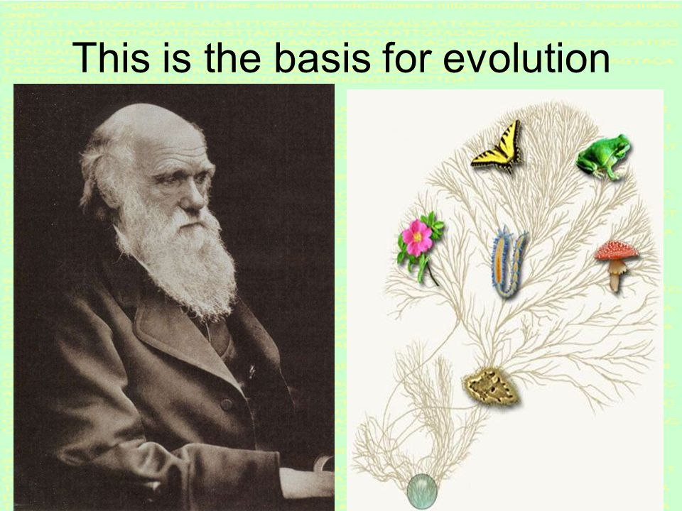 43 Evolutionary arms race