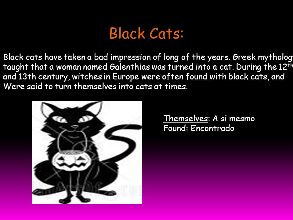 Black Cats: Black cats have taken a bad impression of long of the years.