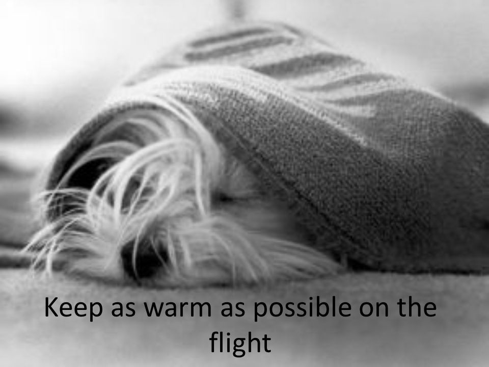 Keep as warm as possible on the flight
