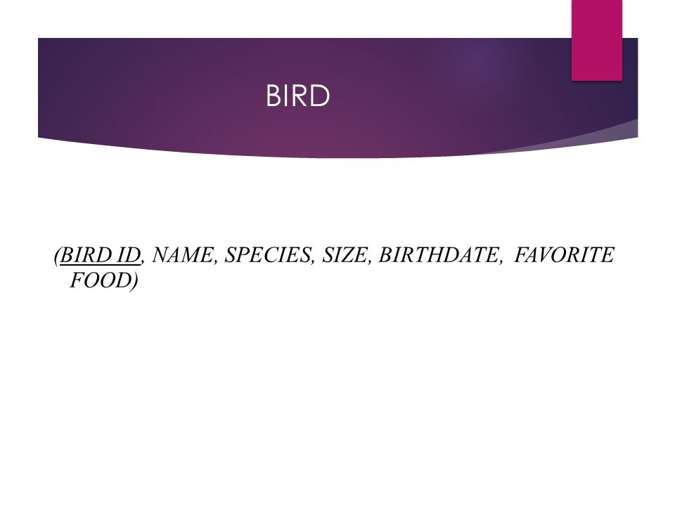 BIRD (BIRD ID, NAME, SPECIES, SIZE, BIRTHDATE, FAVORITE FOOD)