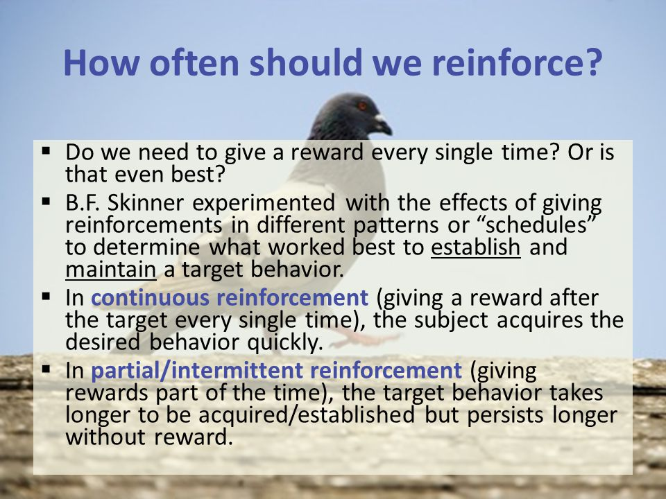 How often should we reinforce.  Do we need to give a reward every single time.