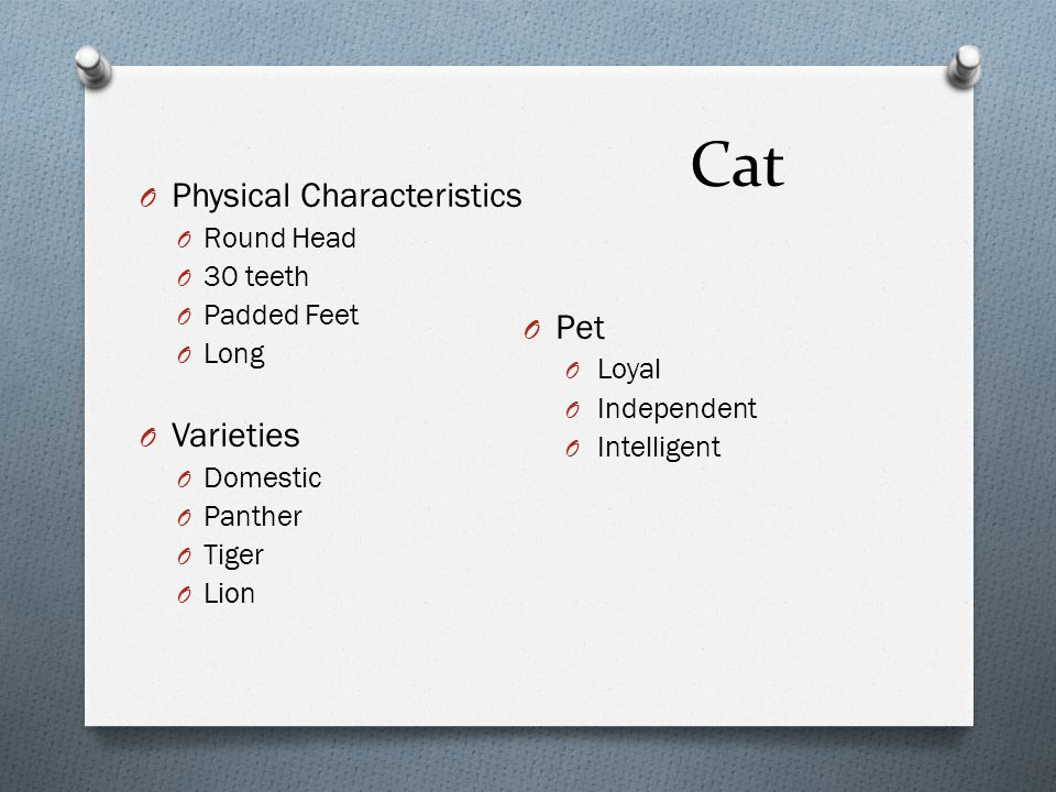 Cat O Physical Characteristics O Round Head O 30 teeth O Padded Feet O Long O Varieties O Domestic O Panther O Tiger O Lion O Pet O Loyal O Independen