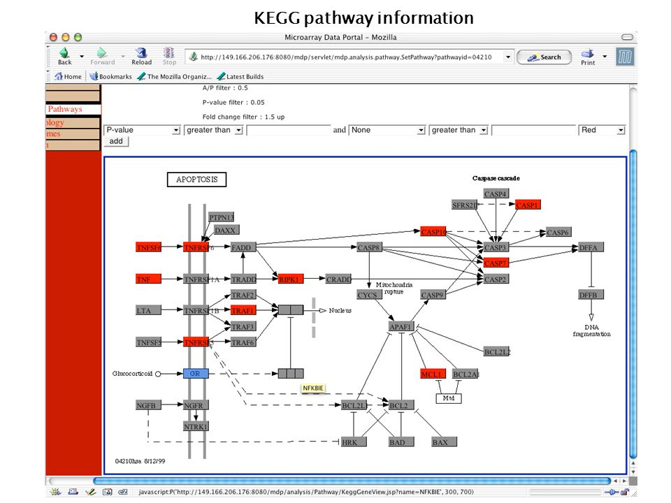 115 KEGG pathway information