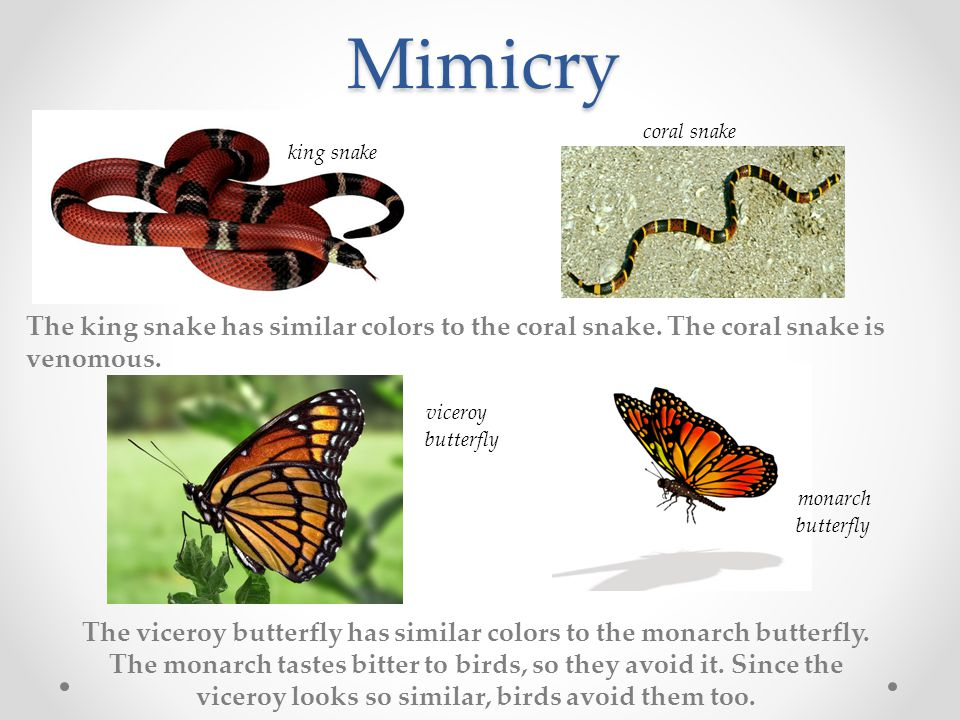 Mimicry The king snake has similar colors to the coral snake.