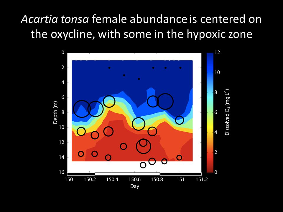 Acartia tonsa female abundance is centered on the oxycline, with some in the hypoxic zone
