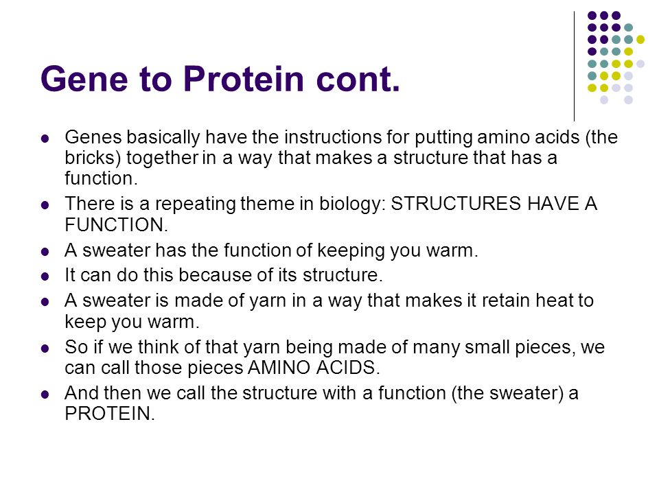 Gene to Protein cont..Therefore, proteins are structures with functions.