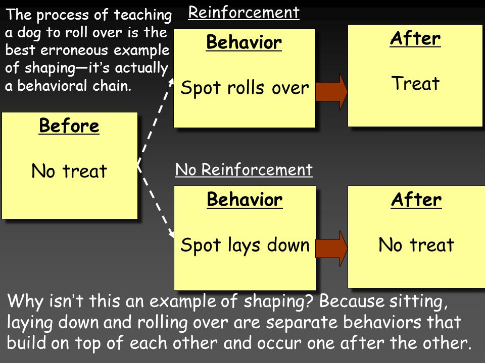 Before No treat Before No treat Behavior Spot lays down Behavior Spot lays down Behavior Spot rolls over Behavior Spot rolls over After Treat After Treat After No treat After No treat Reinforcement No Reinforcement The process of teaching a dog to roll over is the best erroneous example of shaping—it's actually a behavioral chain.