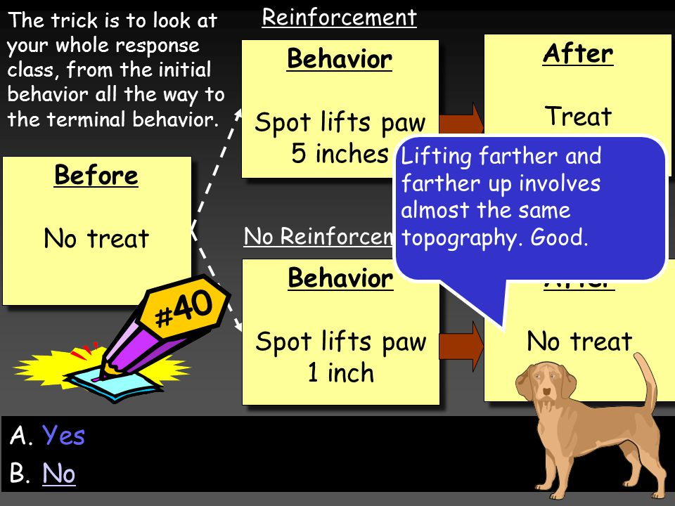 Before No treat Before No treat Behavior Spot lifts paw 1 inch Behavior Spot lifts paw 1 inch Behavior Spot lifts paw 5 inches Behavior Spot lifts paw 5 inches After Treat After Treat After No treat After No treat Reinforcement No Reinforcement The trick is to look at your whole response class, from the initial behavior all the way to the terminal behavior.