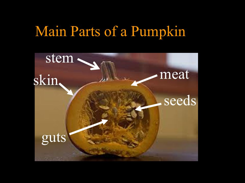 The custom of making Jack-o-Lanterns grew out of this Irish legend of Stingy Jack. Irish immigrants brought the custom to America but discovered that