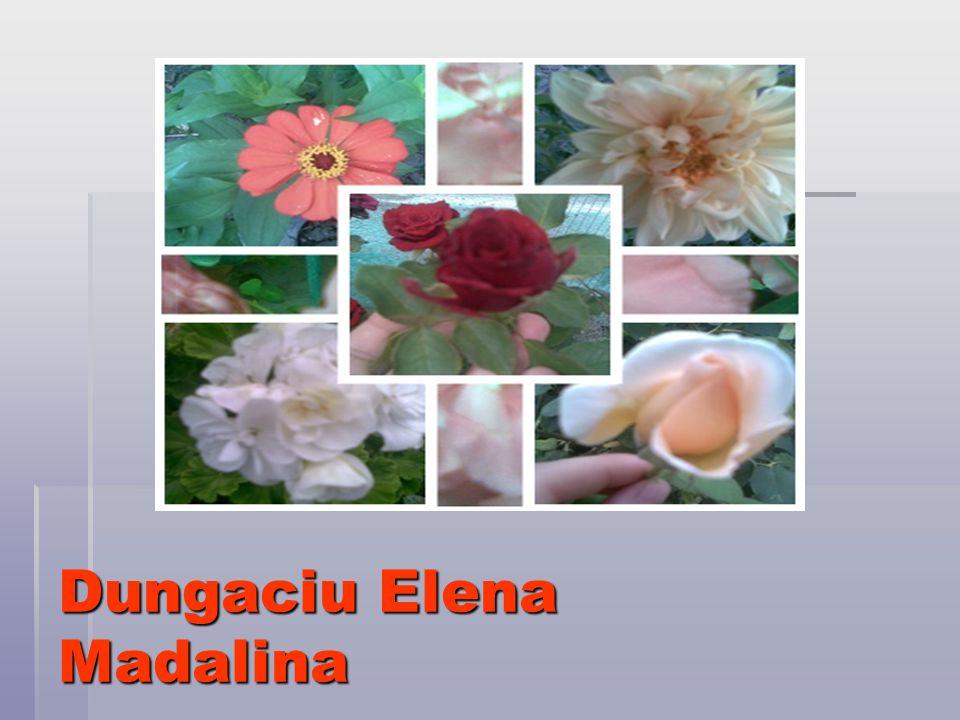 Dungaciu Elena Madalina