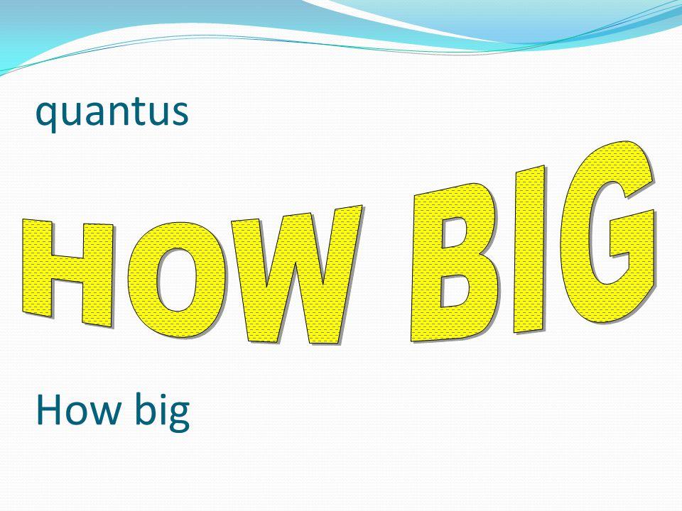 quantus How big