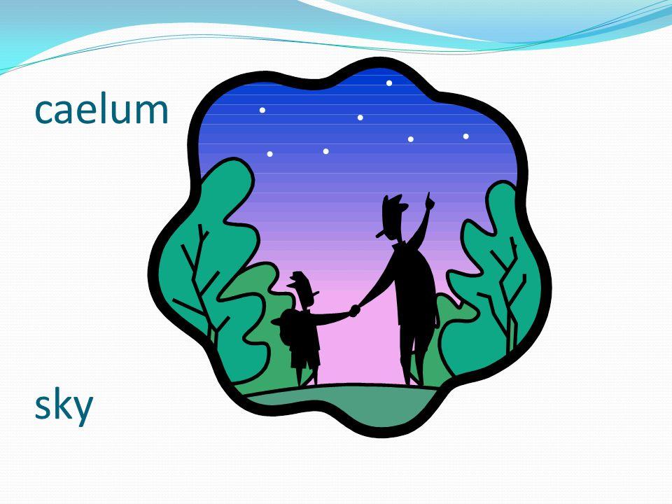 caelum sky