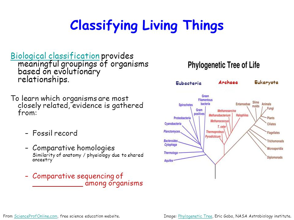 Classifying Living Things Biological classificationBiological classification provides meaningful groupings of organisms based on evolutionary relationships.
