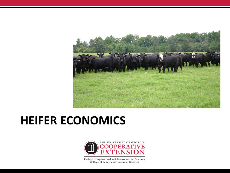 HEIFER ECONOMICS