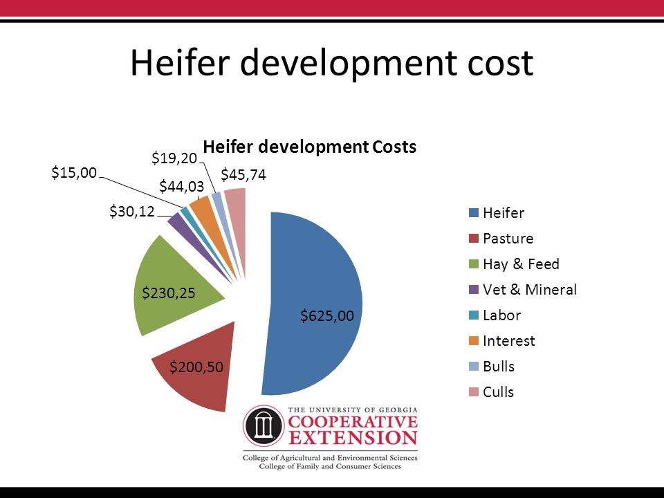 Heifer development cost