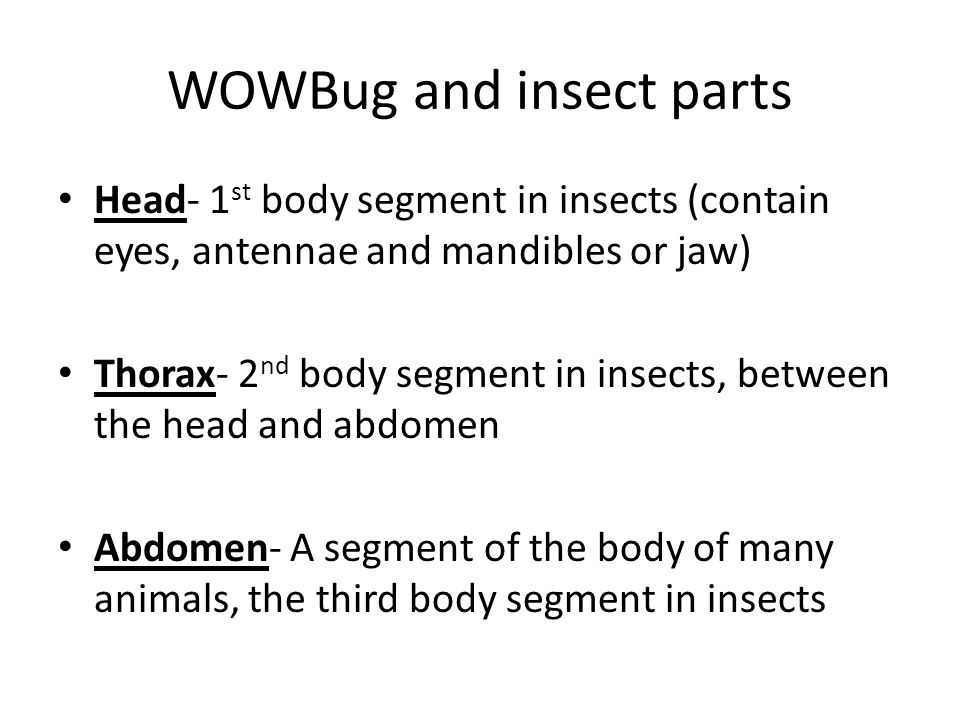 WOWBug and insect parts Head- 1 st body segment in insects (contain eyes, antennae and mandibles or jaw) Thorax- 2 nd body segment in insects, between the head and abdomen Abdomen- A segment of the body of many animals, the third body segment in insects