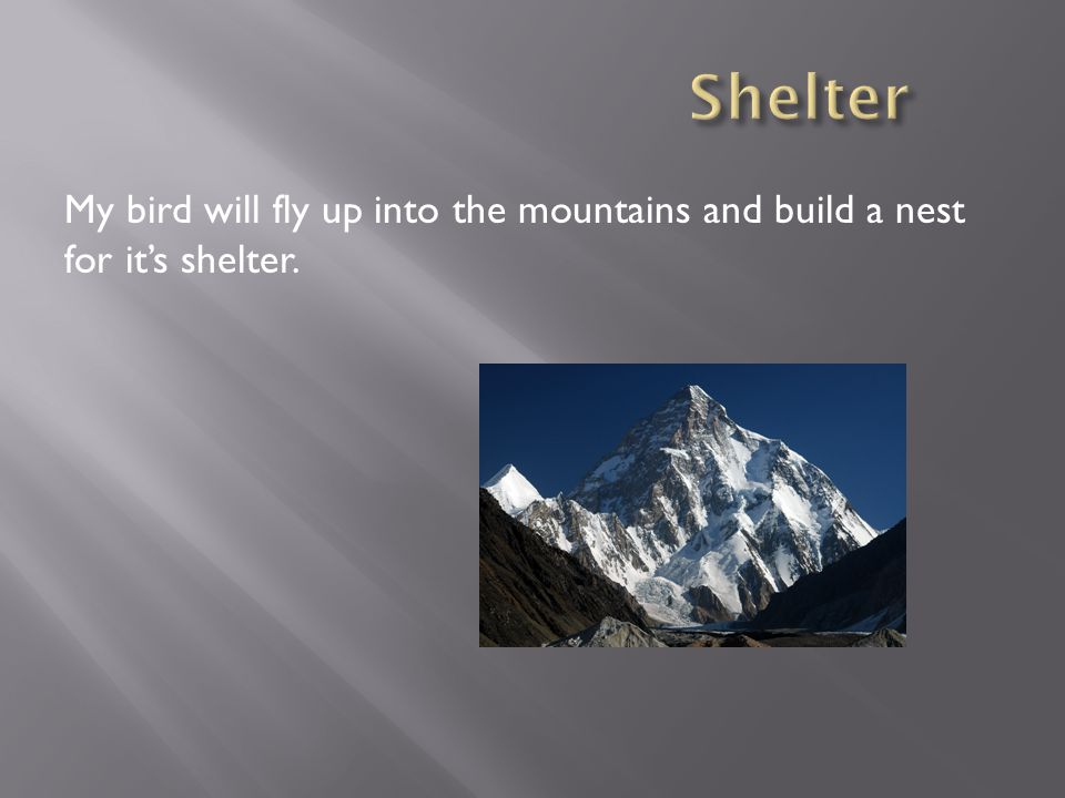 My bird will fly up into the mountains and build a nest for it's shelter.