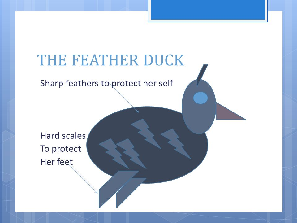 THE FEATHER DUCK Sharp feathers to protect her self Blue Hard scales eyes To protect eye to see Her feet good